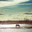 El caballo de Evangeline Lilly