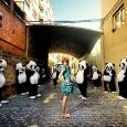 Panda de osados