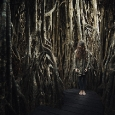 these-roots-are-made-for-walking-1