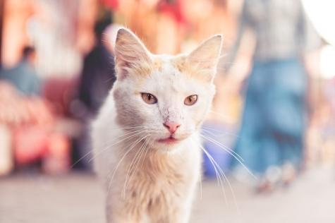 gato-sin-titulo